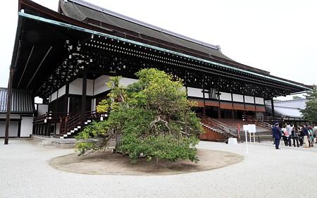 京都御所55