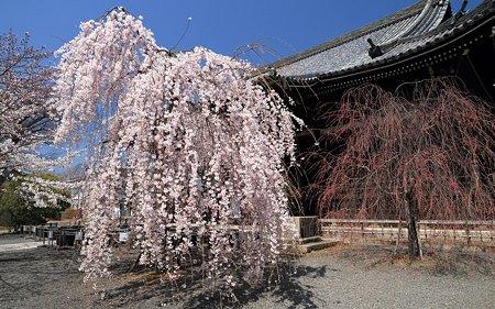 立本寺09