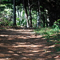 Dappled Light on the Trail