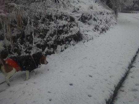 ボクは雪慣れてるよ、、でもあんよが痛くなりそうだから、おかーさんヒヤヒヤしてます