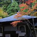 Photos: 高山寺 開山堂の紅葉_01