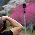 Photos: 咲き乱れる花桃、そして魅せる上腕二頭筋