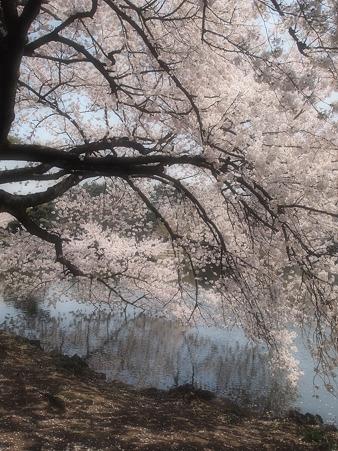 水面に映る景色