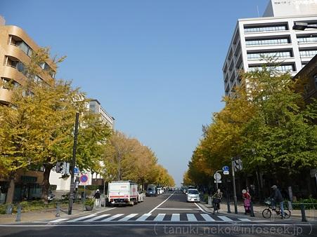 111130-横浜 紅葉 日本大通り (1)