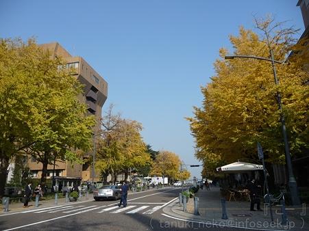 111130-横浜 紅葉 日本大通り (3)