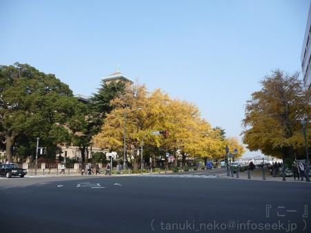 111130-横浜 紅葉 日本大通り (8)