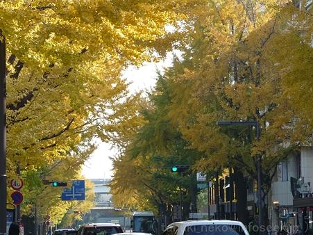 111130-横浜 紅葉  山下公園通り (18)