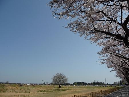 120412-海軍道路 (38)
