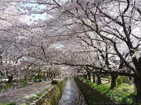 120412-千本桜 (61)