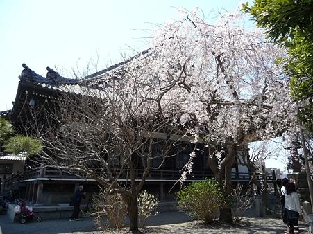 110406-本覚寺 (6)