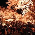 Photos: 桜ローーーーーード