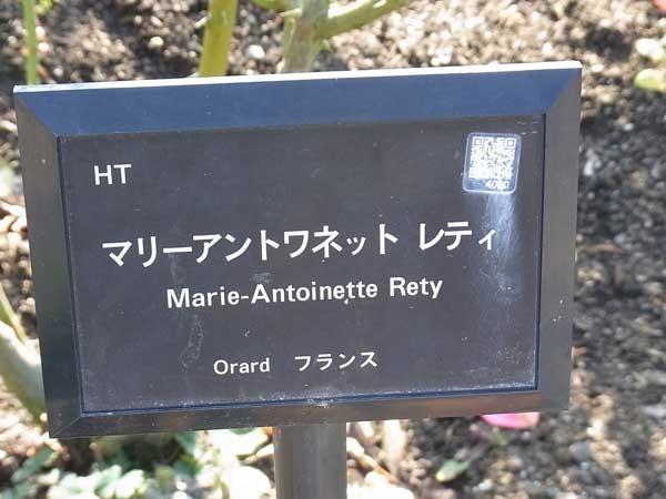 Marie-antoinette-rety