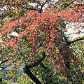 合浦公園・紅葉07-11.10.19