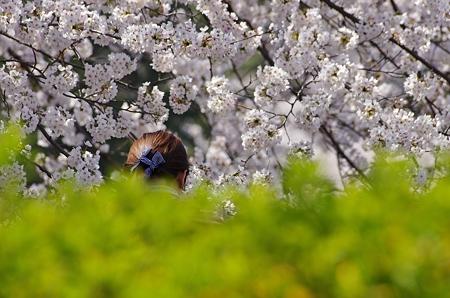 桜を撮った人を撮った!!