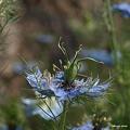 写真: 201105flower 329