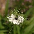 写真: 201105flower 339