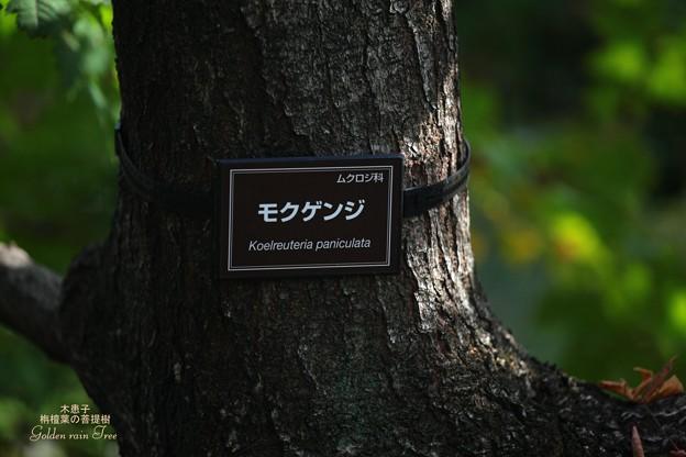 Photos: 皇居の紅葉5