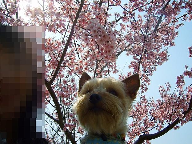 桜をバックにwithノア♪
