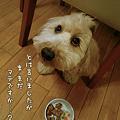 写真: くーかい 3歳の誕生日♪ 4