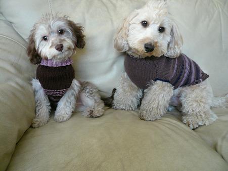 2ワンでセーター 3