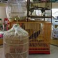 写真: 竹製小鳥カゴ。 円型入荷し...