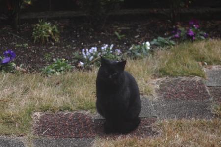 外の黒猫さん