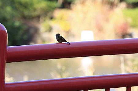 2011.12.05 大池公園 スズメ