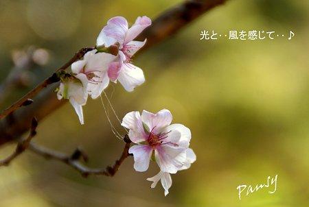秋の桜・・