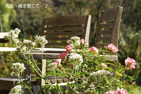 石窯 garden terrace..9