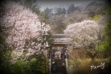 梅らんまんの東慶寺・・25