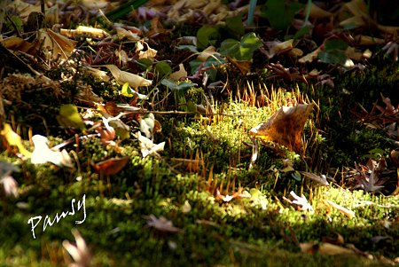 枯れ葉と・・苔と・・