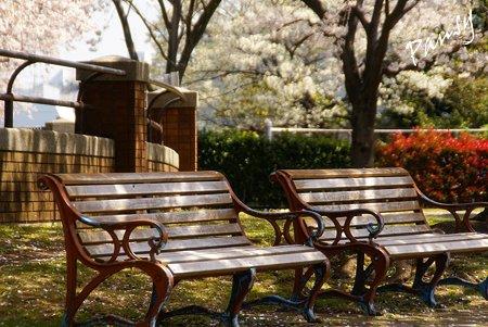 桜景色・・5