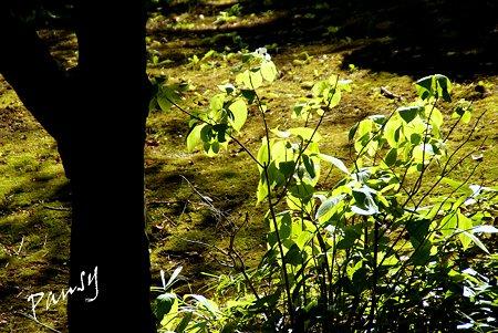 summer green..15