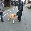 Photos: お散歩いってらっしゃい!