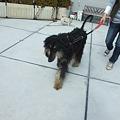 Photos: 大型犬