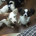 Photos: 保護犬チーム♪