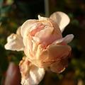 Photos: 2011.12 garden 004