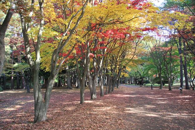 函館・香雪園の紅葉