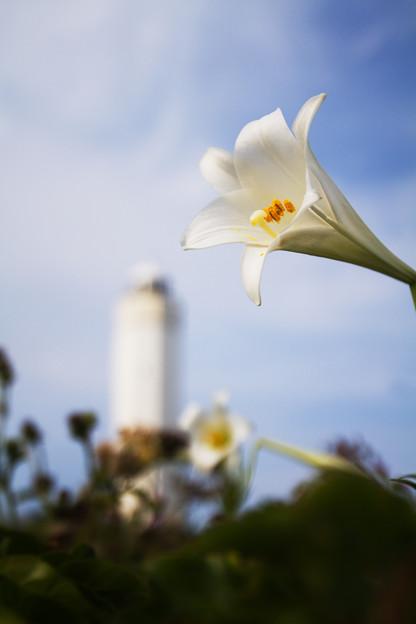 ユリと灯台