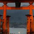 写真: 大鳥居と船頭