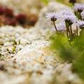 Photos: 道ばたの植物