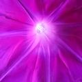 輝くように大輪全開~暁の紫~