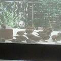 写真: インコちゃんの餌を少し撒い...