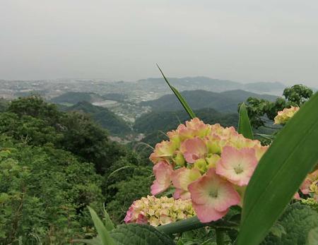 三ヶ根山 あじさいフェスティバル 6月11日(土)・6月12(日) 開催-230612-1
