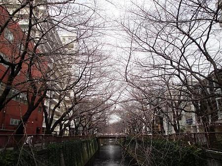 2012.3.22 目黒川