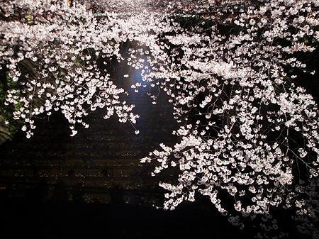 2012.4.7 目黒川の桜