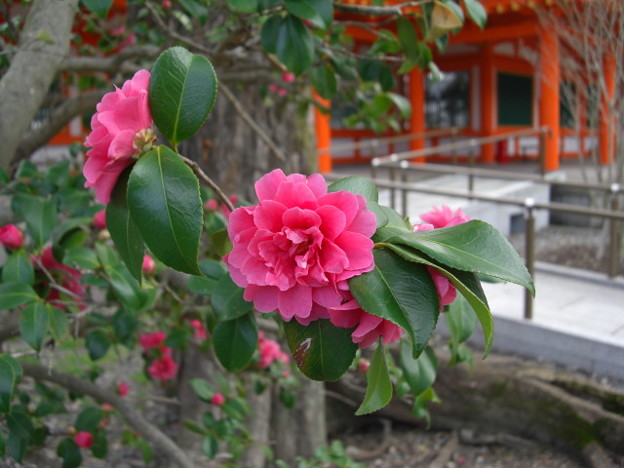 Photos: 蓮華王院