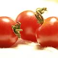 五月のトマト