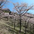 Photos: IMG_6068妙義山__さくらの里と石門のみち2