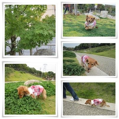 20111105 お散歩2